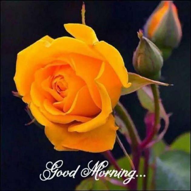 Post by Tushar PateL on 19-Jun-2019 09:11am