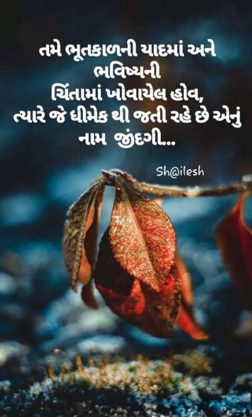 Post by Dimple Sanghadia on 20-Jun-2019 09:50am