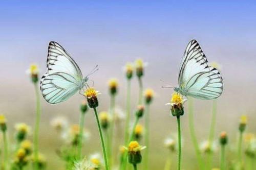 Gujarati Blog status by Chetan Tanna on 15-Jan-2020 11:24:22am   Matrubharti